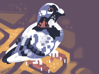 Piebald Pigeon bird pigeon animal illustration
