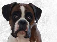 Jesse the Boxer Dog