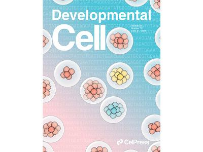 Developmental Cell Cover for Volume 56, Issue 12