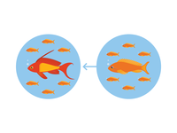 Sex Change In Fish (Female To Male)
