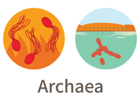 Three Domains of Life (Archaea)