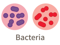 Three Domains of Life (Bacteria)
