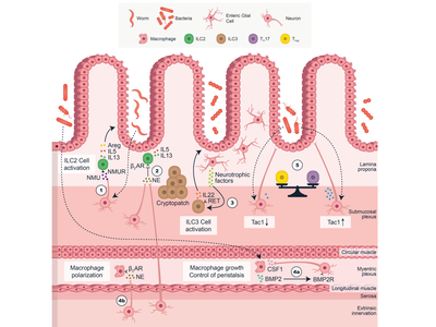 Five Different Interactions in the Intestine