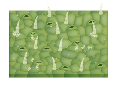 Bacterial Life on Plant Leaf Surfaces