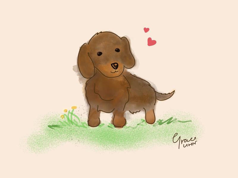 Puppy Love chocolate serif affinity designer dogs gradient art illustration dog illustration dog puppy