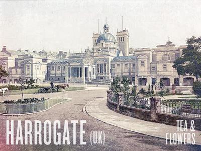 Harrogate town harrogate uk knockout