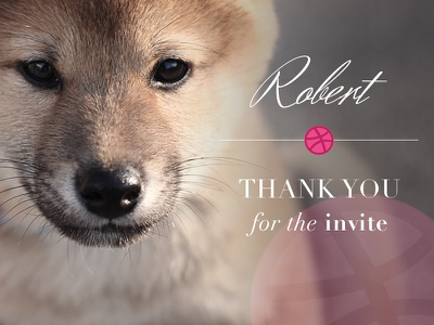 1st shot | Thanks to Robert puppy doge drafted first shot shiba inu shiba thank you thanks invite draft