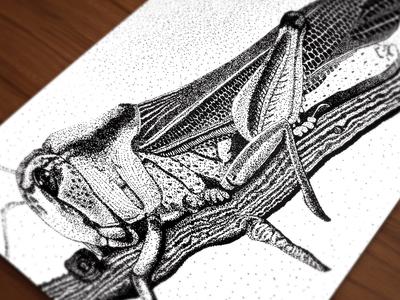 Grasshopper Pointalism Ink Illustration