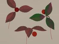 Tea Berries