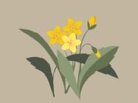 Hammond's Yellow Spring Beauties