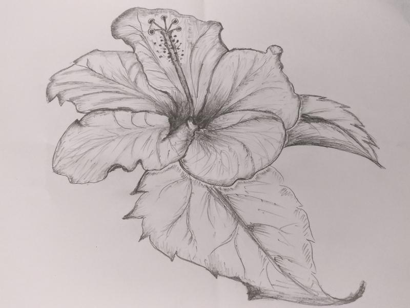 Hibiscus Flower Art By Mlspcart On Dribbble