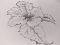 Hibiscus Flower Art