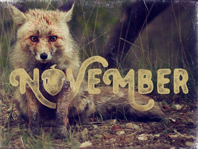 November fox acorn autumn unsplash photos unsplash month series november type typography