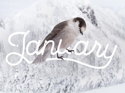 January months ligatures graphic design type design winter january custom typography custom type type pen tool lettering typography