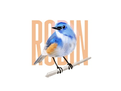 Various Birds - Procreate Practice paint outdoors robin oriole chickadee art font type doodle salamanca app procreate nature bird birds illustration