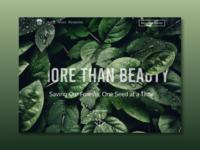 More Than Beauty