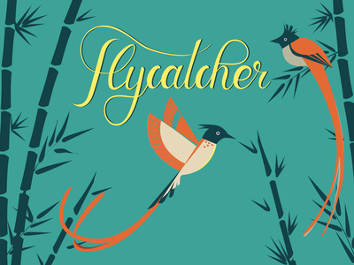 Indian paradise flycatcher illustration lettering