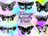 40 Vintage butterfly and moth vector collection