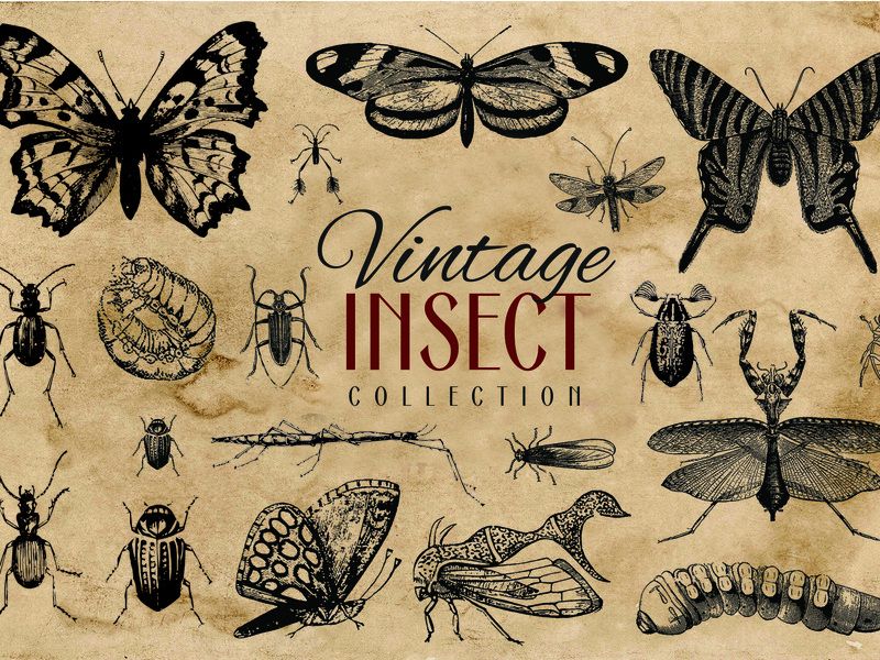 200 Vintage Insect Vector Graphics Collection graphic design retro vintage antique old illustration art vector artworks vector artwork vector art vector fly bettle cicada butterfly moth bug insect illustration design