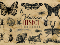 200 Vintage Insect Vector Graphics Collection