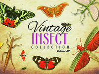 Vintage Insect Collection Volume 3