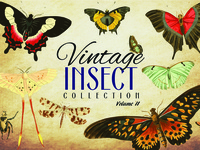 Vintage Insect Collection Volume 2