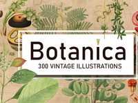 300 Vintage Botanical Illustrations