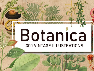 300 Vintage Botanical Illustrations illustrations art natual nature plant illustration flower art flower plant botanical illustration botanic botanicals botanical art botanical botany bonati image illustration easy to use graphic design design