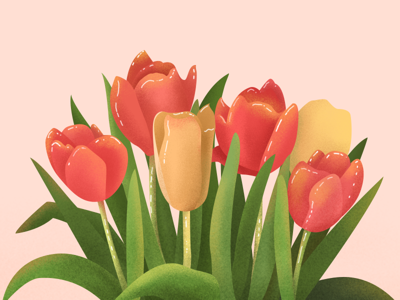 Tulip design illustration
