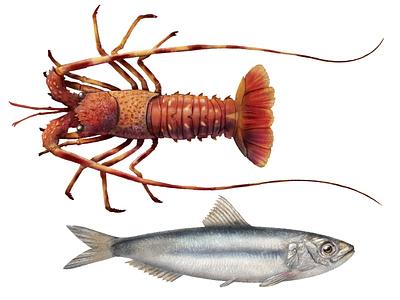 Fishes x Regione Toscana 3 nature food fish logo fishing fish animal advertising flyer advertising drawing illustration calendar