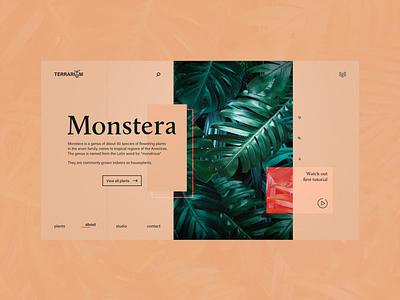 Terrarium for Monstera plants garden flowers website homepage design