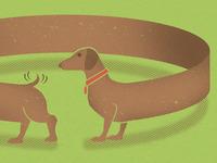 Circledog 2