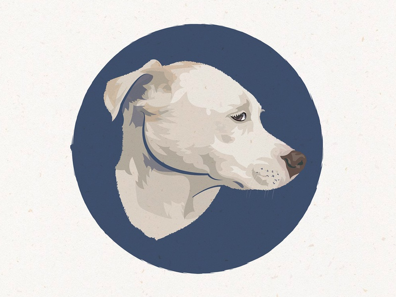 Dog Portrait (The Light One)