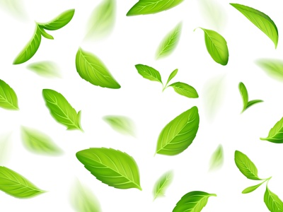 Mint tea tea summer spring illustraion illustrator icon vector fresh green leaf leaves pattern background mint