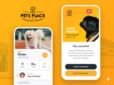 Pet's Place - Branding & Vet App Concept