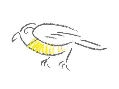Sketchy Bird Exploration us virgin islands sketch pencil packaging illustration bananaquit coffee bird
