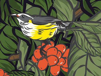 Virgin Islands Coffee - New Stuff art direction packaging design virgin islands design illustration coffee bird