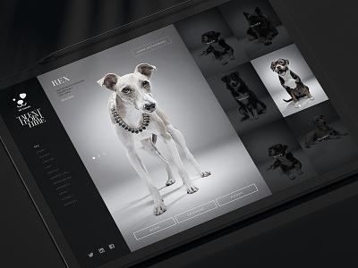 Talent For Hire dubai advertising web studio photo gray grayscale dog animal saatchi charity responsive graphic design webdesign website site design ui ux art direction
