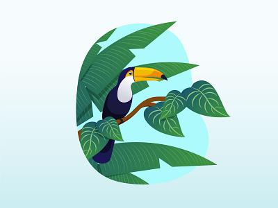 Tropical bird fauna flora nature leaf animal brazil summer palm bird toucan tropical