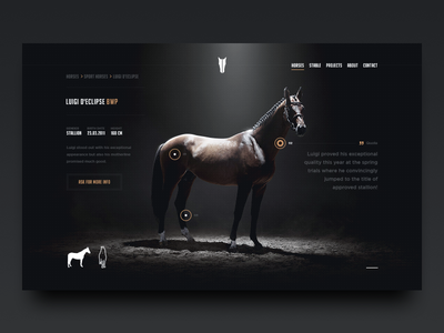 TMS - Horse page tms tal milstein stables horses rider web hellowiktor