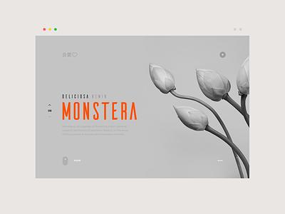 monstera deliciosa blog article shop plant web grid layout ui ux website landing page web design