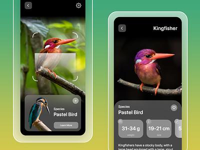 Discover New Birds | with AR scan | App UI bird app ui bird app search birds app discover birds birds app ui birds bird design uiux ui design ui app ui