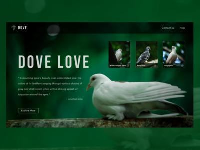 Dove Gallery - Home