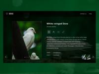 Dove details view