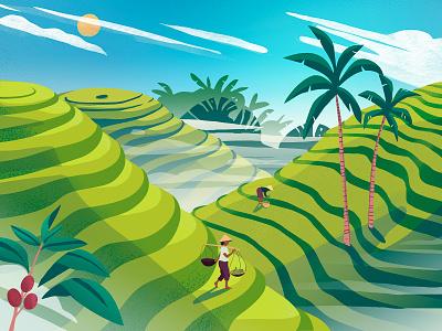 Rice fields utrecht ontwerp graphic asia vietnam ricefield web ux ui branding vector illustratie editorial holland amsterdam design adobe illustrator illustration adobe photoshop