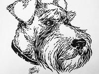 Schnauzer Illustration