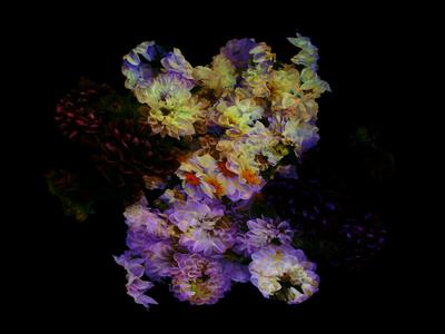 Z Flower symmetry composite sf flowers z justforfun