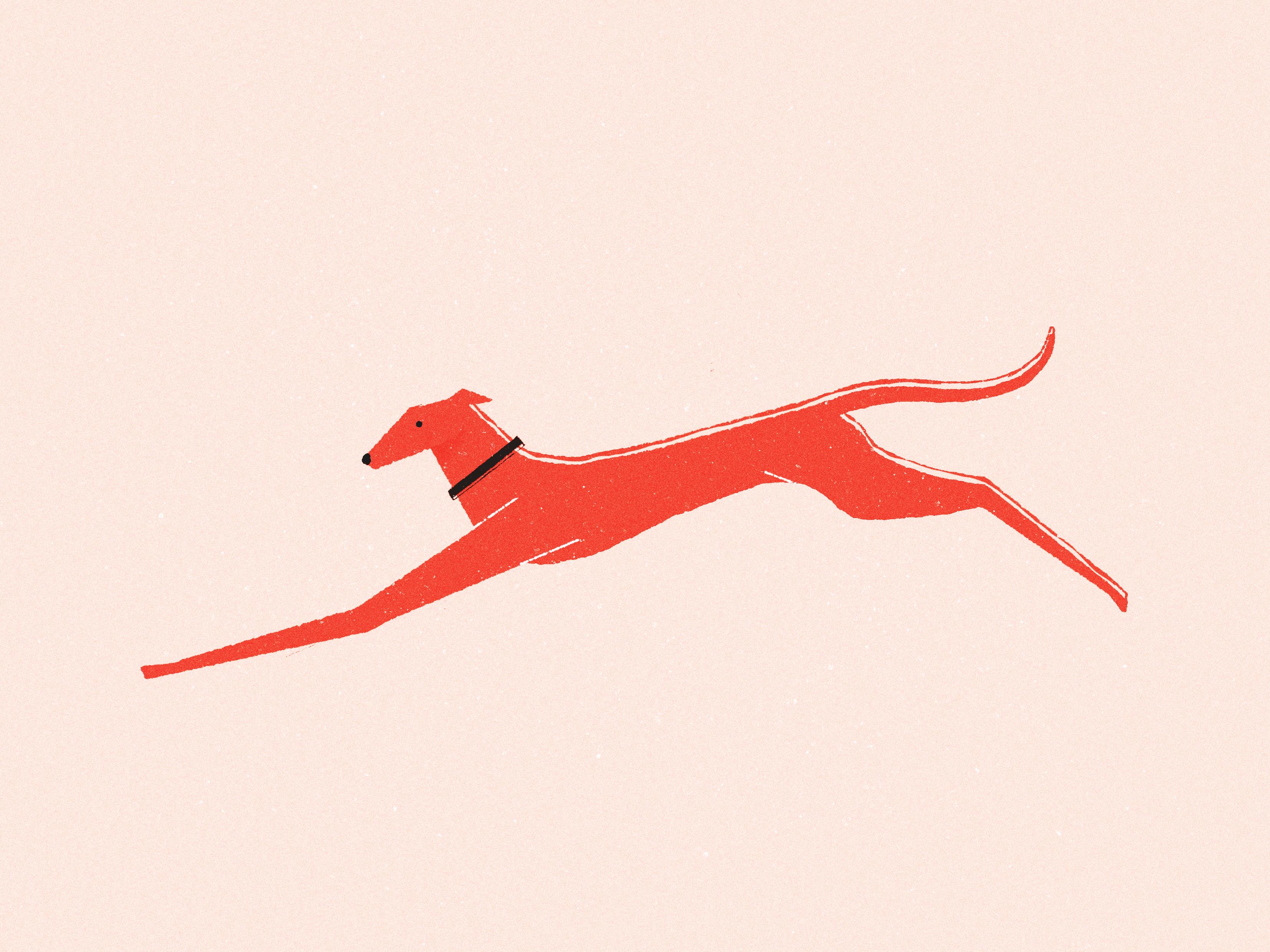 Offbeat estudio illustration dog