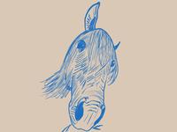 A horse face