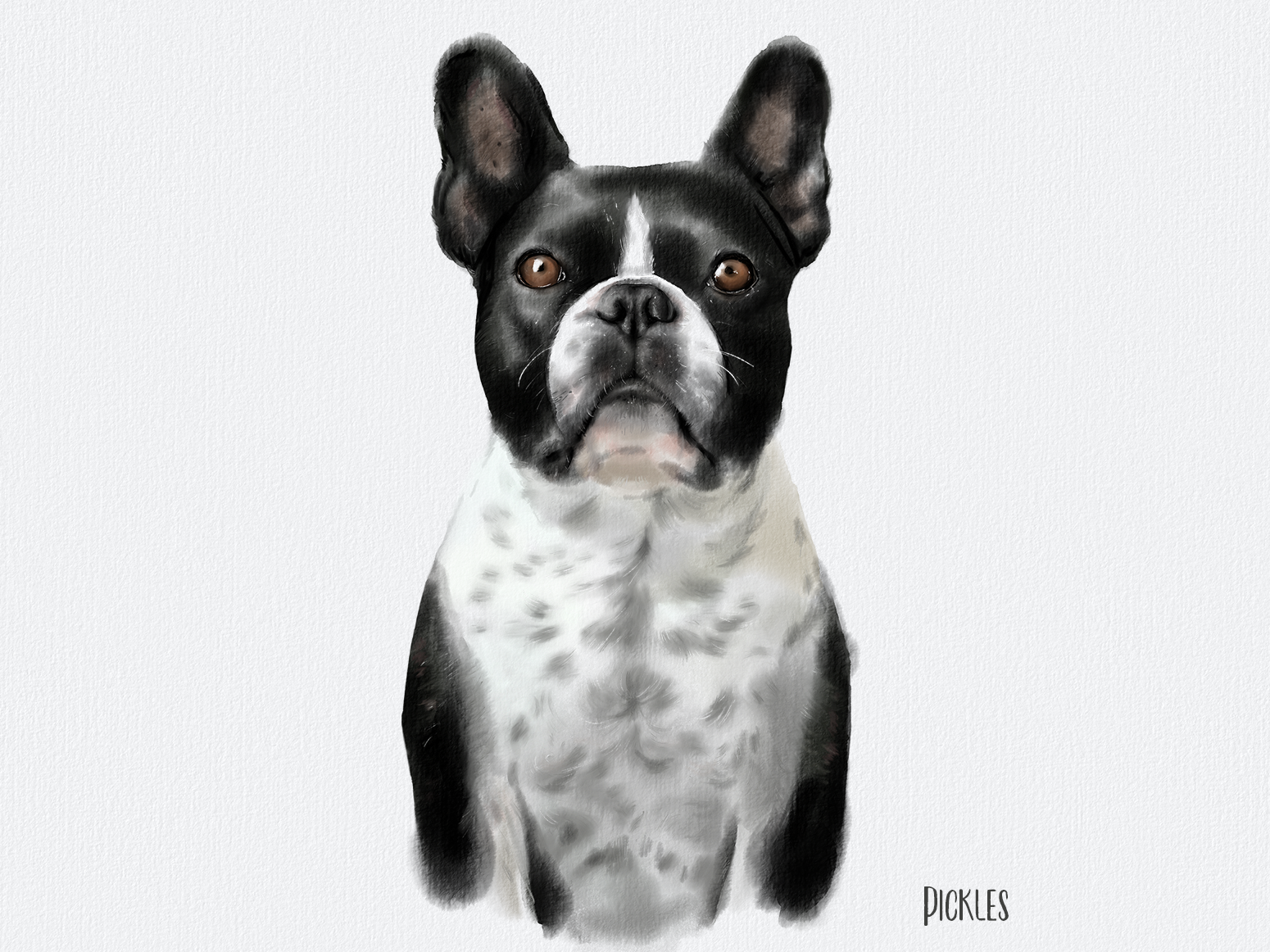 Meet Pickles The French Bulldog By Darina Gavrilyuk On Dribbble